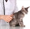Ветеринарные клиники в Дебесах